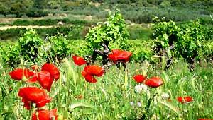 vente vin biologique Beaujolais