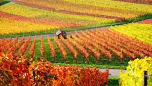 vente vin bourgogne
