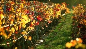 achat grands crus Bordeaux
