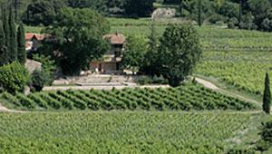 vente vins Provence