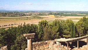 Muscat Languedoc