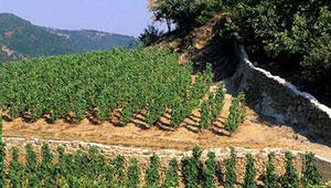 vente vin blanc